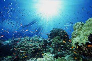 Почему море называют морем?