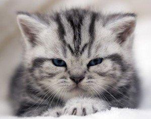 Почему кошки топчутся?