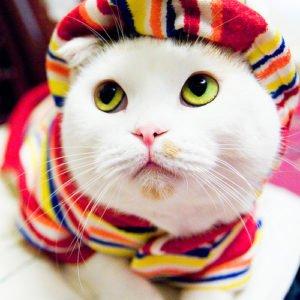 Почему кошки мурлыкают?