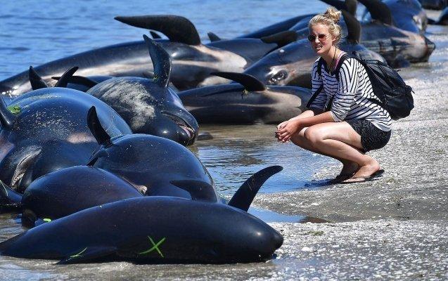 Массовый суицид дельфинов