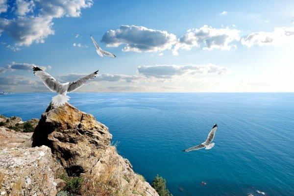 Черное море и птицы