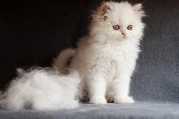 Котенок и шерсть