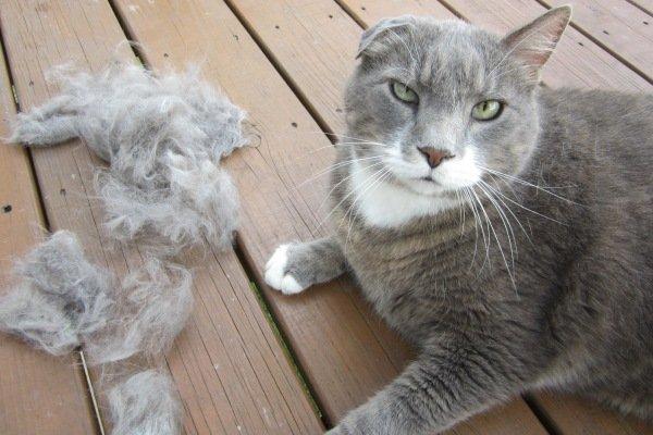 Кот и клоки шерсти