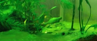 Зеленеет вода